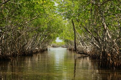 Bigstock mangrove 115124450