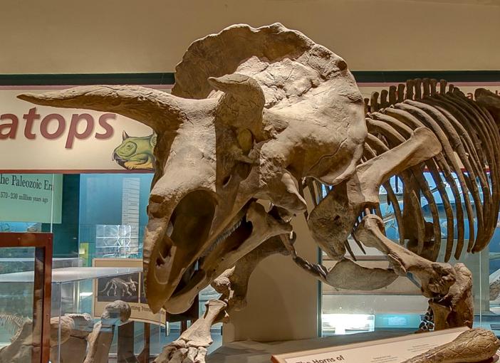 4dinosaur2