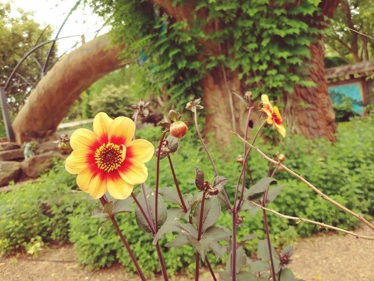 Children s garden