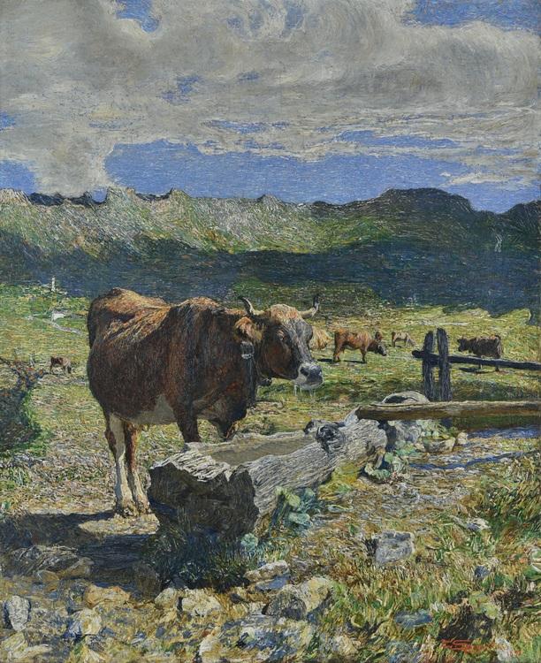 Vacca bruna all abbeveratoio 2555
